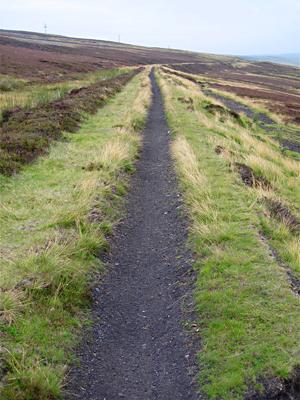Bike trail through heather in Pennines